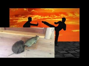 Self Defense Lessons From Cat vs Monkey Fights