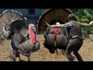 Turkey self defense training